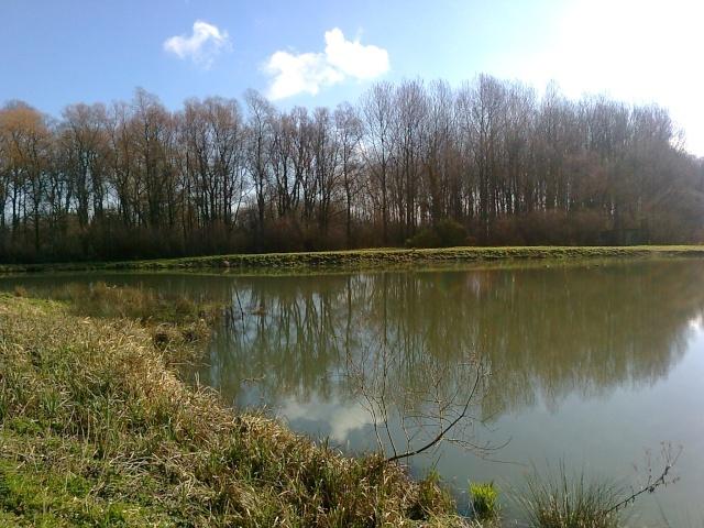 mon étang a hames boucres  Photo030