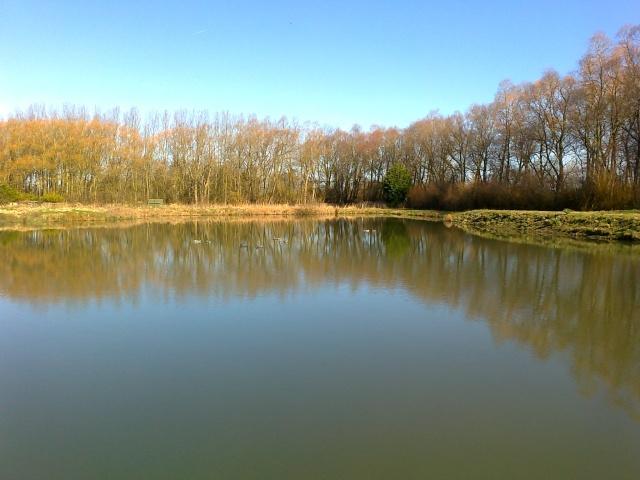 mon étang a hames boucres  Photo032