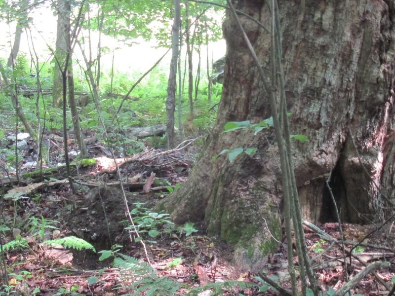 Avant midi de creuse à la Dompe du Vieux Chemin 00811