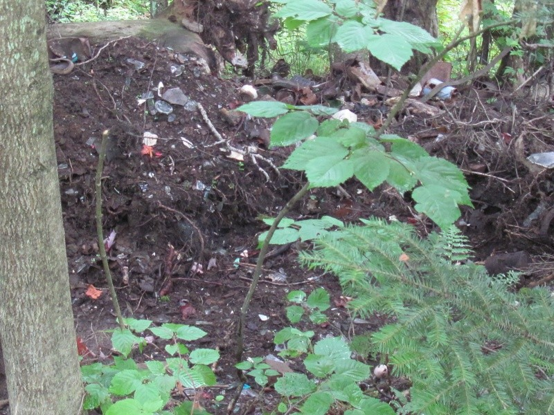 Avant midi de creuse à la Dompe du Vieux Chemin 01411