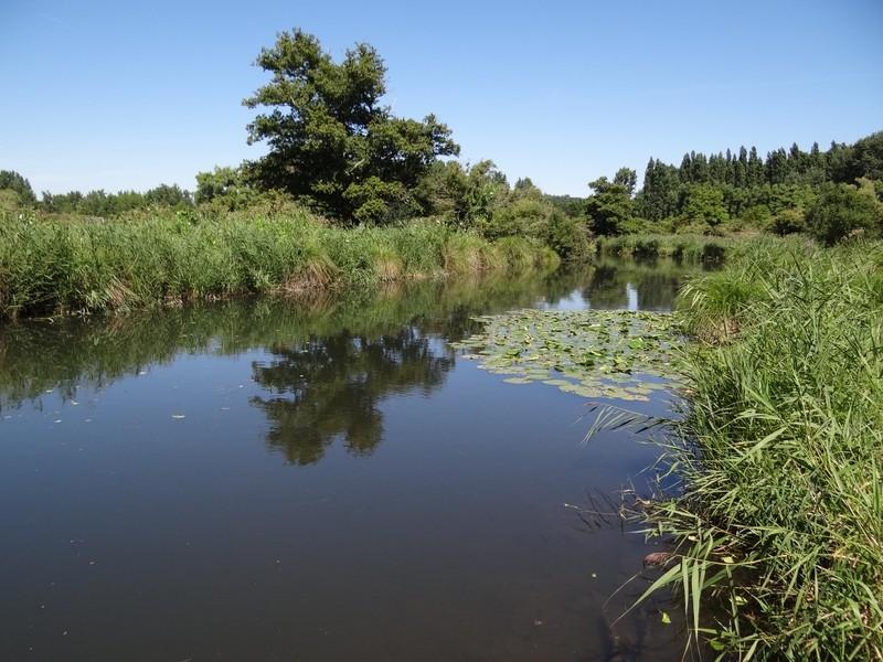 Le long de l'Essonne Dsc00013