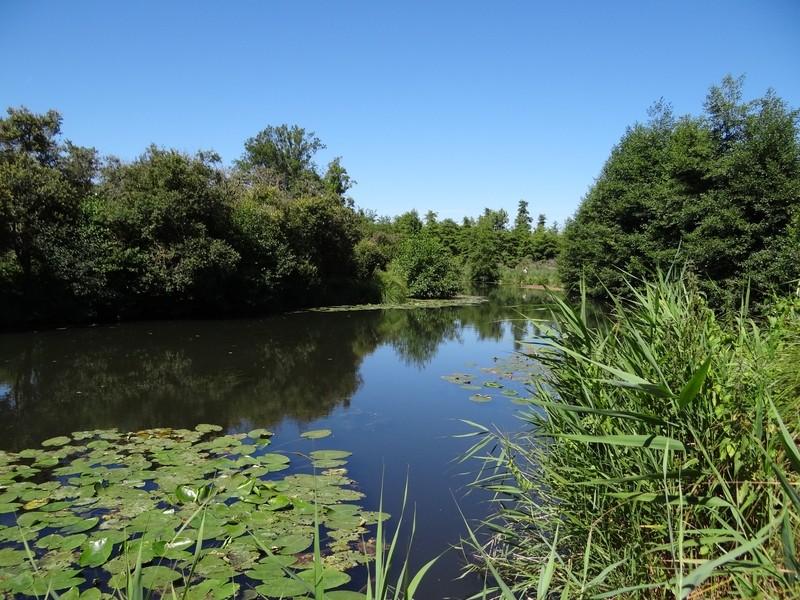 Le long de l'Essonne Dsc00014