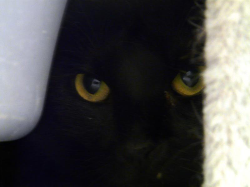 les yeux de quechua P1060011