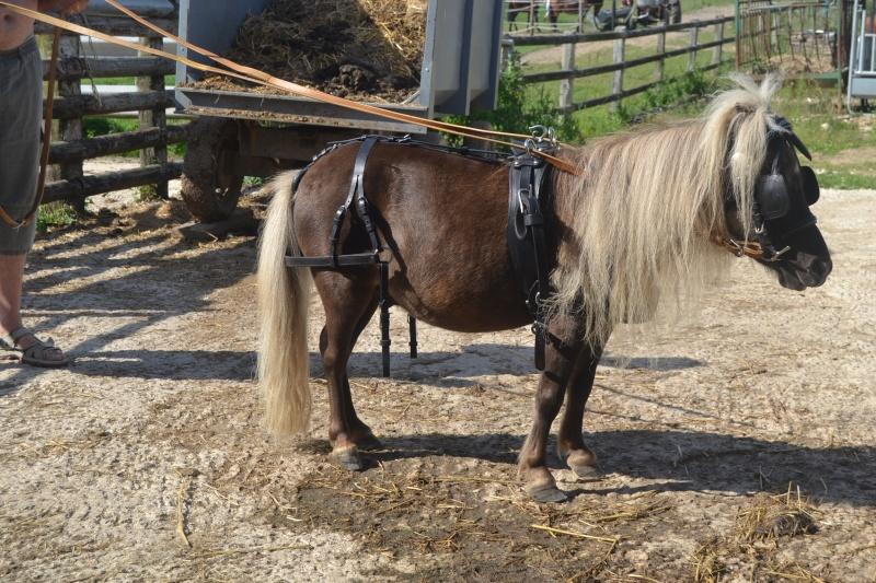 Nos deux autres chevaux Dsc_0117