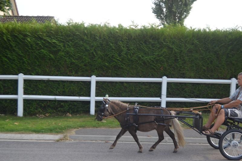 Nos deux autres chevaux Dsc_0119