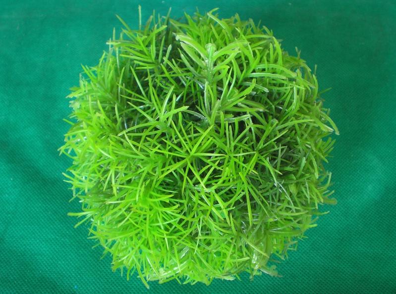 Preiswertes Material zur Pflanzengestaltung Materi14