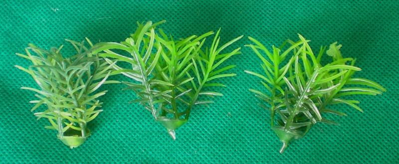 Preiswertes Material zur Pflanzengestaltung Materi16