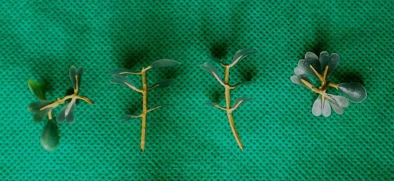 Preiswertes Material zur Pflanzengestaltung Materi20