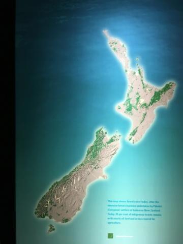 Nouvelle Zélande - Page 2 Img_3911