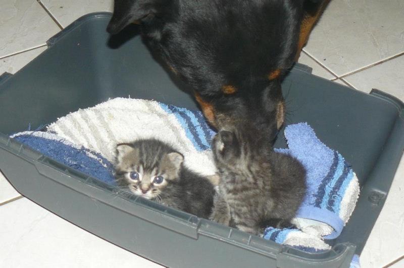 Hudson, Hiron et Hale en fa refuge animalier de Brax 47 22616010