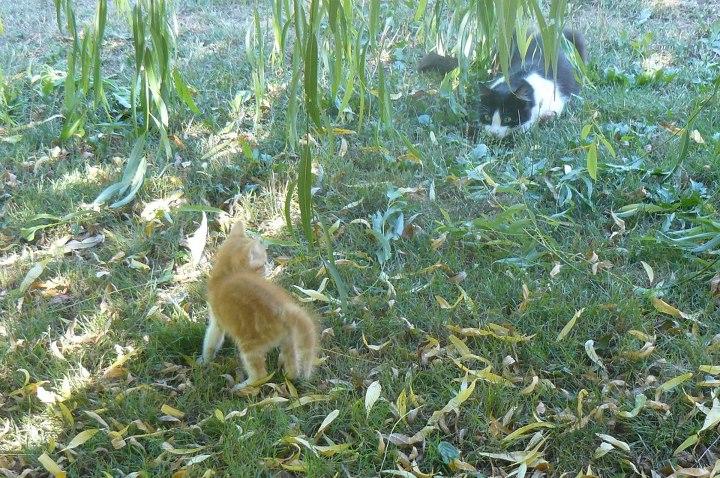 Hudson, Hiron et Hale en fa refuge animalier de Brax 47 39976710