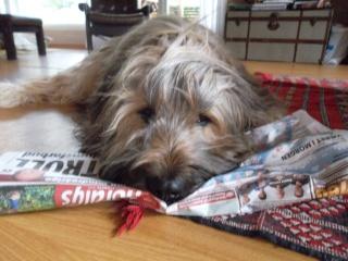 the all Dog thread! Sam_3110