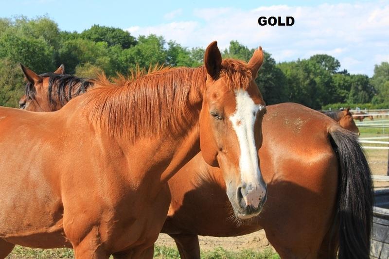 GOLD - SF né en 1994 - Annonce désactivée en l'absence de nouvelles du propriétaire Img69210