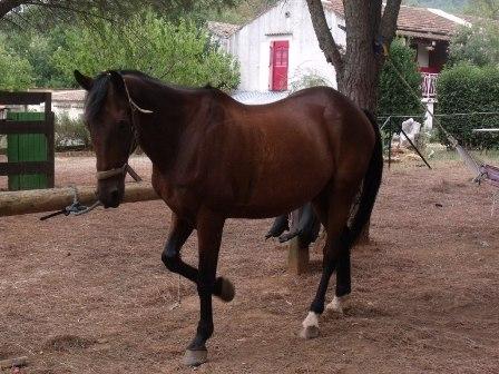 ECLAIR - ONC hongre présumé né en 1991 - placé hors association Photo_26