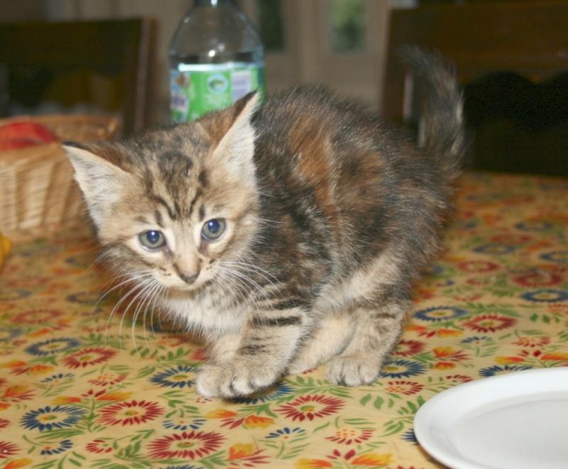 recherche FA/asso pour une quinzaine de chats qui risquent l'euthanasie Chaton10