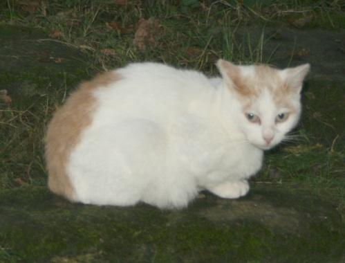 recherche FA/asso pour une quinzaine de chats qui risquent l'euthanasie Chatte10