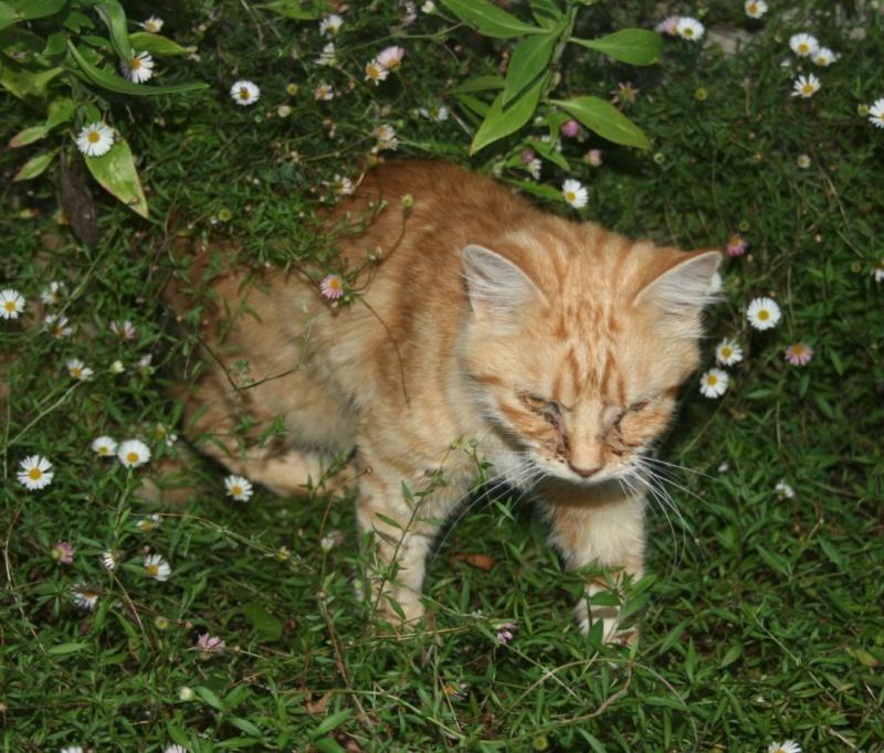 recherche FA/asso pour une quinzaine de chats qui risquent l'euthanasie Chatte11