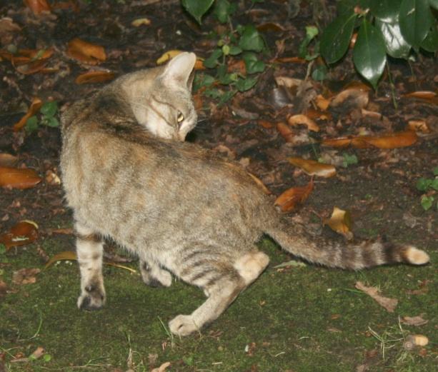 recherche FA/asso pour une quinzaine de chats qui risquent l'euthanasie Chatte12