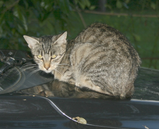 recherche FA/asso pour une quinzaine de chats qui risquent l'euthanasie Chatte13