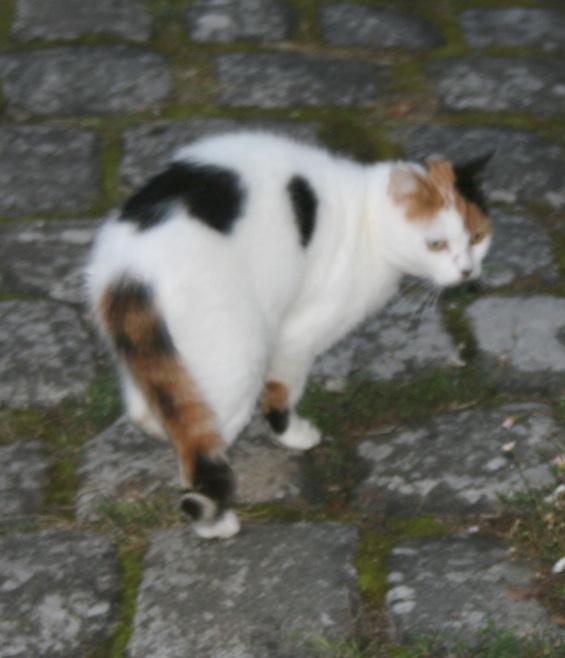 recherche FA/asso pour une quinzaine de chats qui risquent l'euthanasie Chatte14