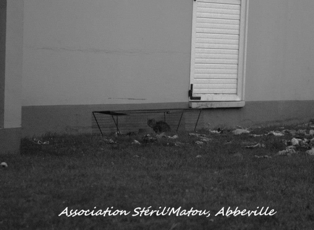 Trappage de 2 chatons en danger, sous la pluie Le_voi11