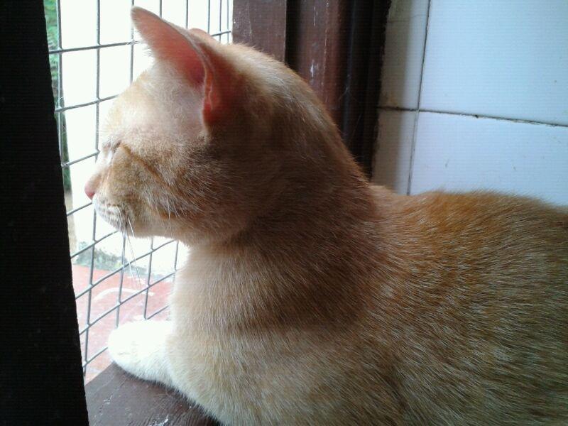 Chico,un amor de gatito rubio,un añito...le abandonan por bebe ¡ADOPTADO! Img_3012