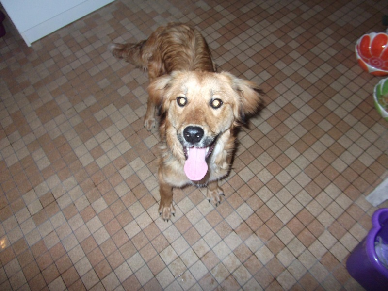 trouvé chienne non identifié a Treize vents (85) Chienn10