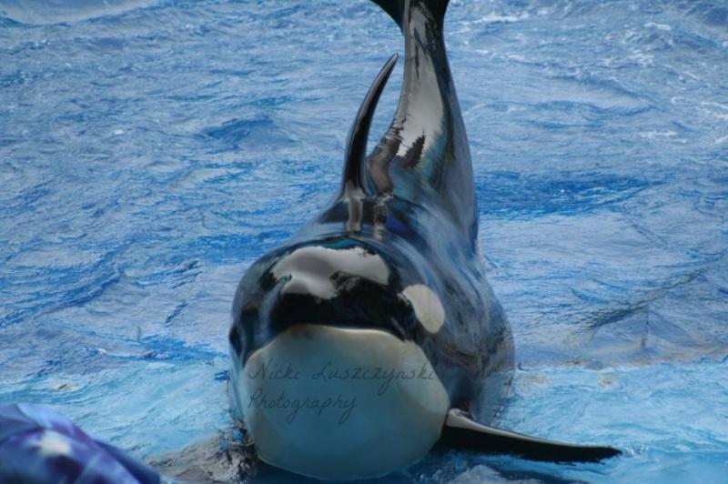 [Orques captives - Biographie] Makaio - Page 2 Makaio10
