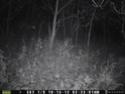 Primos X-Cam Blackout 9_pic_10
