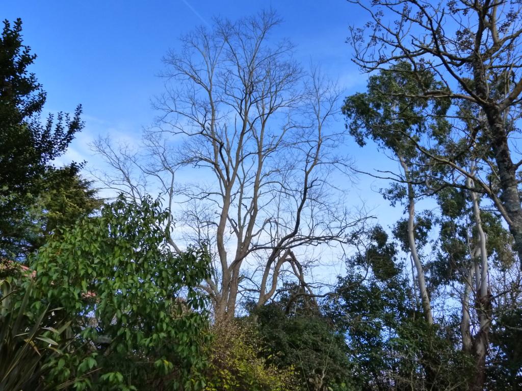 Nos arbres en hiver 2018 Arbres10