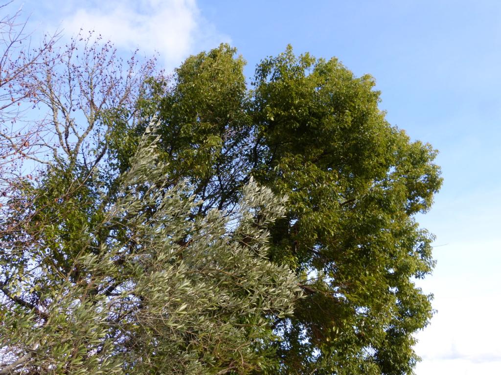 Nos arbres en hiver 2018 Arbres11