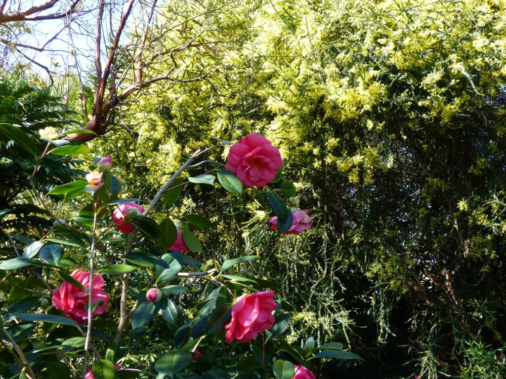 brassées fleuries Camell49