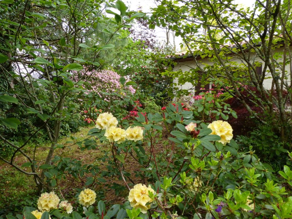 Brassées fleuries - Page 2 Florai11