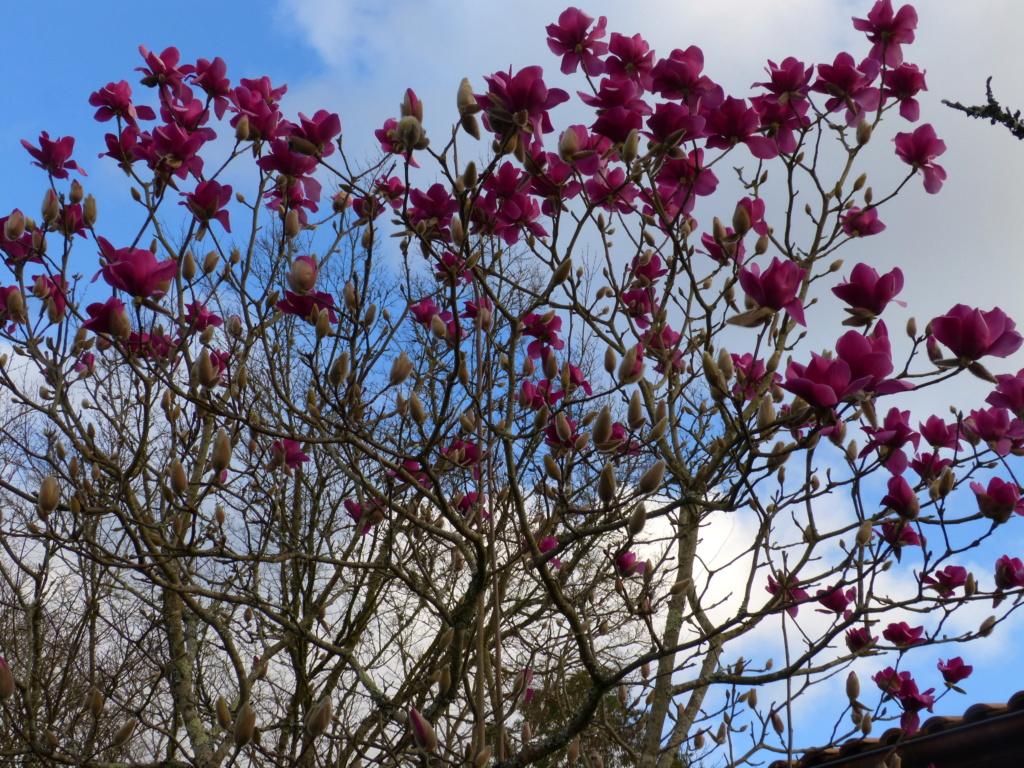 brins de printemps Magnol13