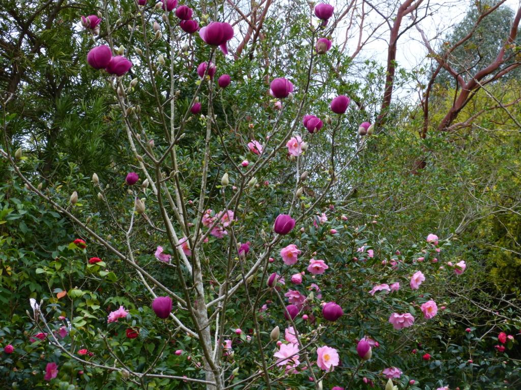 brins de printemps Magnol19
