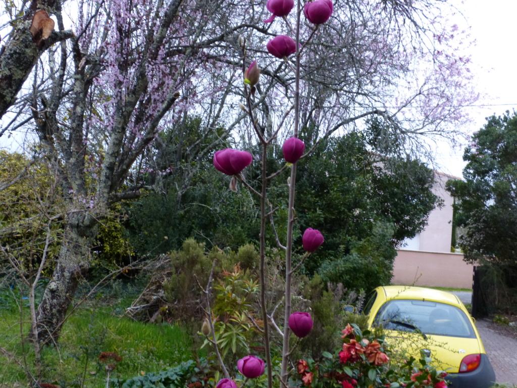 brins de printemps Magnol20