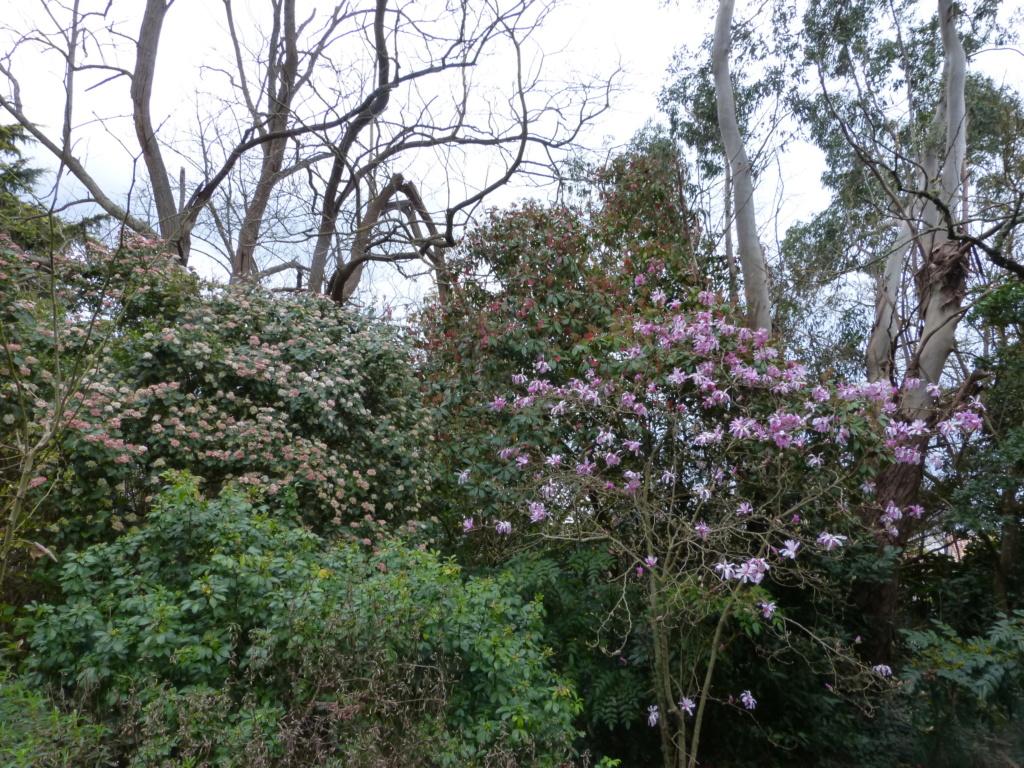 brins de printemps Magnol21