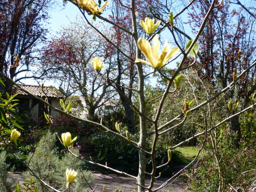 brassées fleuries Magnol23