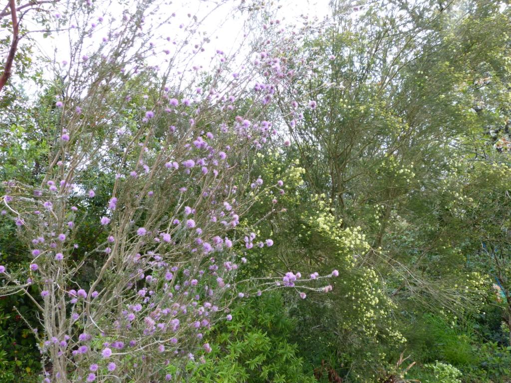 brassées fleuries Melale12