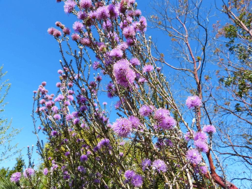 brassées fleuries Melale14