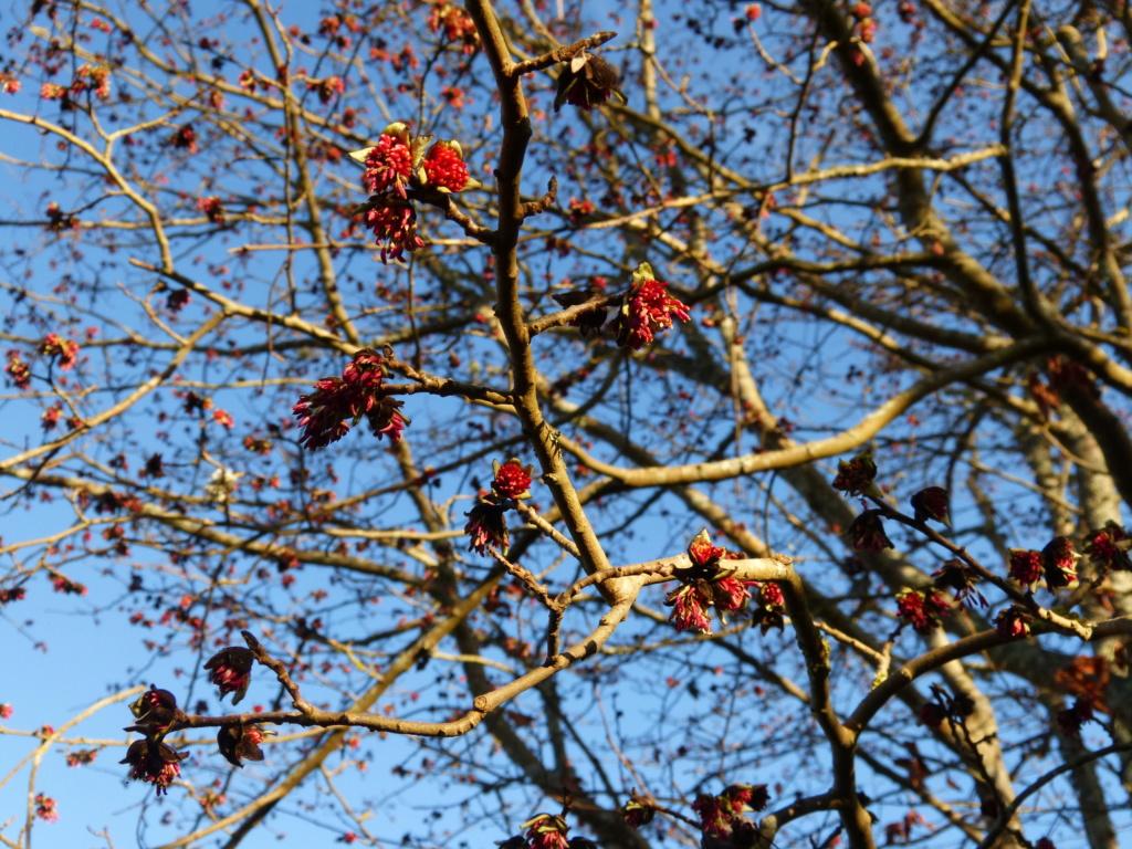 jardins (de) givrés Parrot11