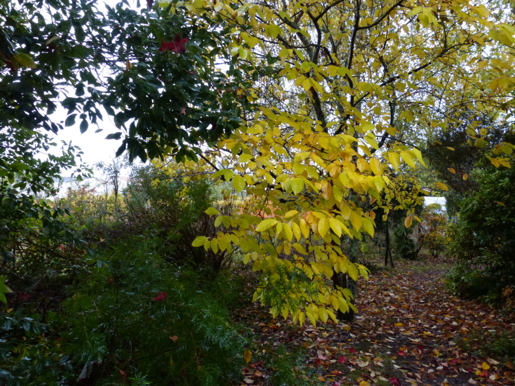 Couleurs d'automne - 2018 Paysag19