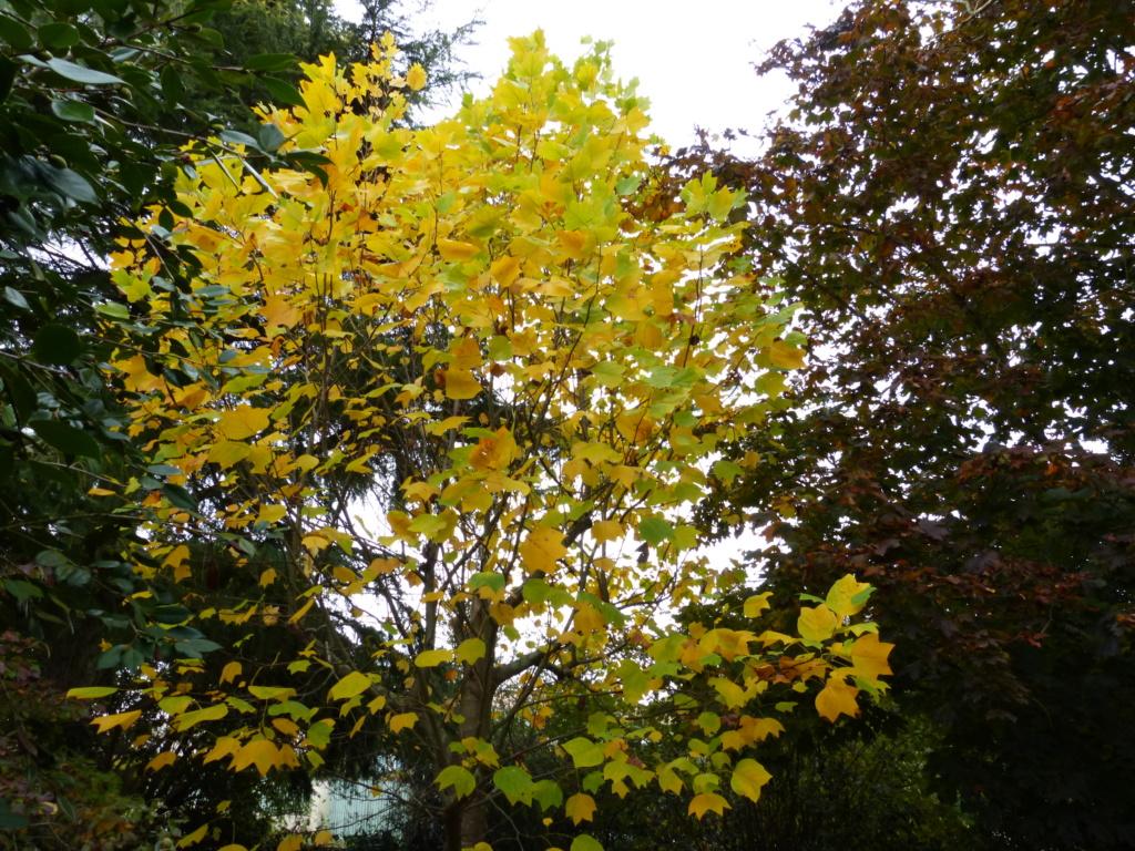 Couleurs d'automne - 2018 Paysag22