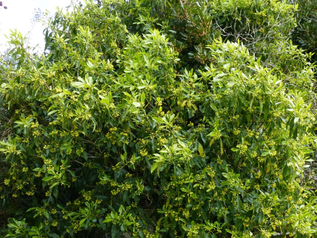 brassées fleuries Pittos18