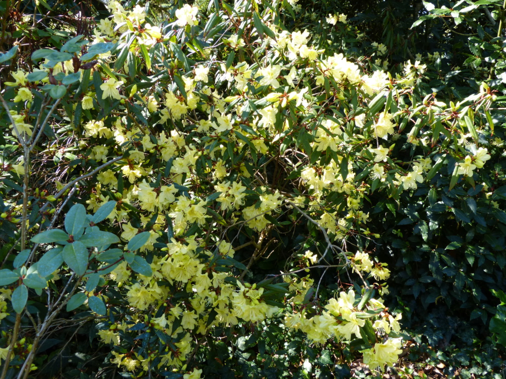 brassées fleuries Rhodod19