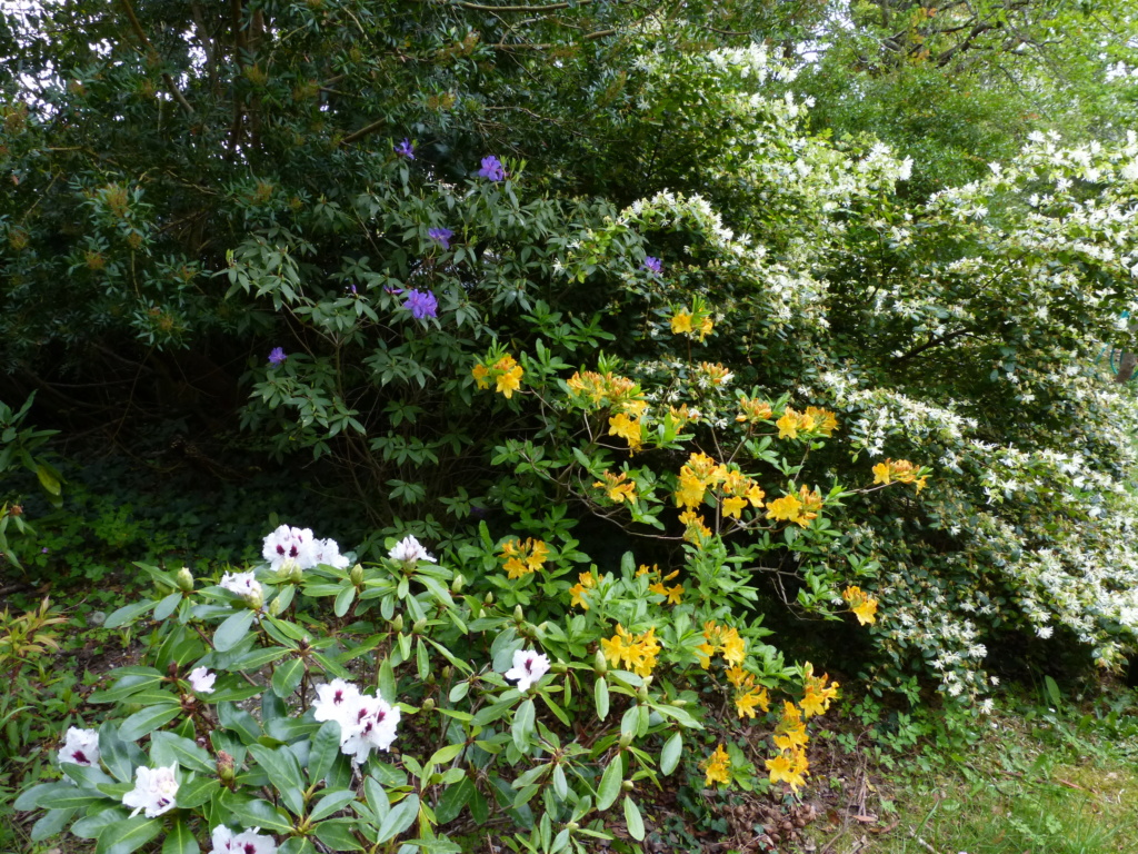 Brassées fleuries - Page 2 Rhodod21
