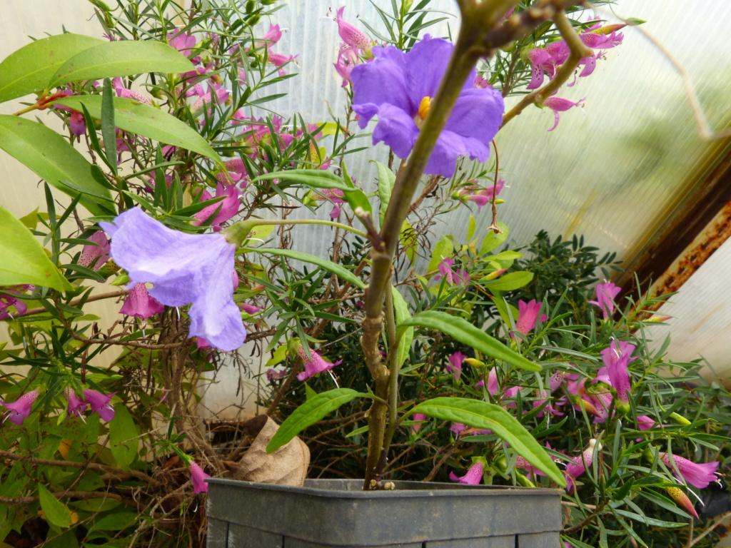 brassées fleuries Solanu10
