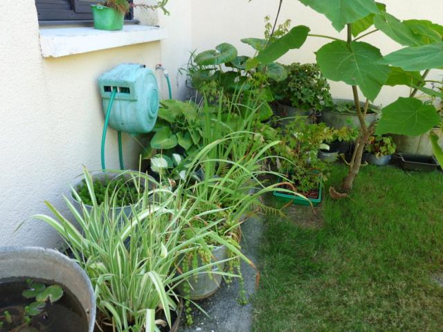 jardins de soleil Aquati10