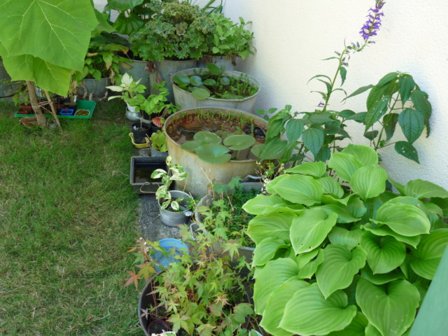 jardins de soleil Aquati11