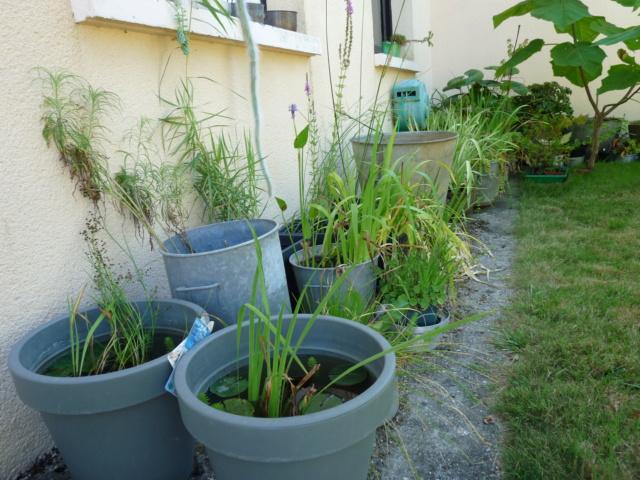 jardins de soleil Aquati12